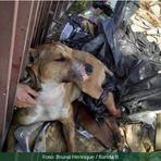 Cão é pendurado pelas pernas e come pata no desespero