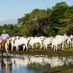 Meio ambiente - E-mailImprimir Software mede nível de sustentabilidade de fazendas no Pantanal