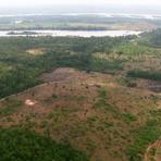 """Meio ambiente - Sistema busca """"barrar"""" desmatamento no Pará"""