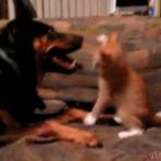 A prova de que gatos não tem medo