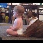 Cachorro dá banho de língua em bebê.