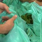 Meio ambiente - Sacolinha para lixo será fiscalizada por amostragem e denúncia em SP