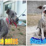 Cadela resgatada há quatro meses pela Gerência de Proteção dos Animais apresenta total recuperação