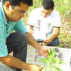 Meio ambiente - Sedecti e UFT ofertam vagas para pós-graduação para Educação Ambiental