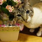 Blog da Estela: Insuficiência renal felina