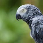Papagaio inglês desaparecido há quatro anos retorna falando espanhol