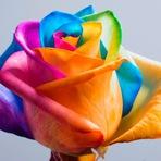 Como fazer uma rosa arco-íris