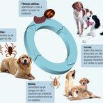 Doença do Carrapato ou Erlichiose Canina