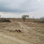 Rapaz de Santa Cruz do Capibaribe é violentamente assassinado nas proximidades da Funase de Caruaru