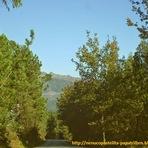 Turismo - PR1 - Rota dos Laranjais - Tondela - Caramulo