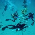 Animais - A corrida para salvar os Recifes de Coral