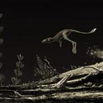 Animais - A Origem dos Dinossauros e Pterossauros?