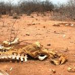 1915, a grande seca. 2015 será a próxima grande seca?