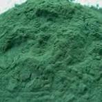 Spirulina | Rica em proteínas e um poderoso antioxidante