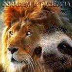 Coragem do leão e paciência da preguiça ...Paciência da preguiça Para agir com sabedoria é preciso lutar com a coragem