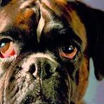 Campanha Emocionante coloca em foco o corpo de matrizes caninas, obrigadas a procriar repetidamente