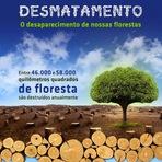 O desaparecimento de nossas florestas e as consequências para o planeta