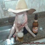 Porco na cerveja