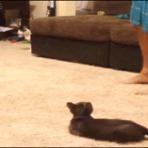 Sustinho felino