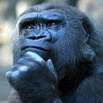 Refletindo sobre sabedoria e idiotice
