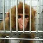 As 6 empresas que mais maltratam animais no mundo