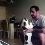 Mulher instala câmeras em casa e flagra o namorado agredindo suas cadelas