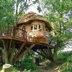 Casas nas Árvores!