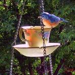 Aprenda como atrair pássaros para seu jardim