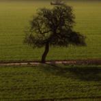 """Meio ambiente - As árvores """"gritam"""" quando estão morrendo"""