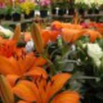 Plantas ornamentais decorativas para seu lar