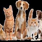 Animais - Relacionamento com os animais de estimação