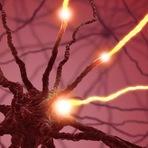 Sinapses no cérebro agem como amigos nas redes sociais