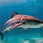 Tubarões: será mesmo que são os verdadeiros vilões dos mares?