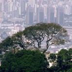 Plano Municipal da Mata Atlântica: 'por cidades mais humanas e sustentáveis' - Por Mario Mantovani