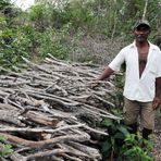 Manejo florestal melhora vida de mil famílias no semiárido do Nordeste