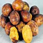 Uxi | Fruta da região Amazônica