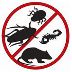Controle de pragas: quais as etapas e como exterminar as baratas.