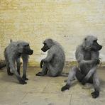 Esculturas realistas de animais feitos em arame galvanizado
