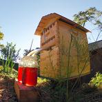 Nova caixa de abelha que extrai automaticamente o mel