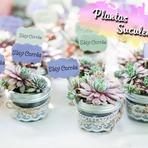 DECORAÇÃO: Plantas Suculentas!
