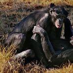 Animais - O mistério da homossexualidade em animais