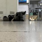 5 dicas para se dormir confortavelmente em aeroportos