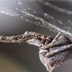 Animais - Aranha de teia elétrica?