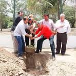 380 novas árvores serão plantadas no Parque do São Francisco