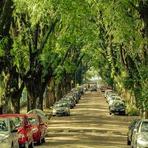 Morar perto de árvores reduz casos de depressão, segundo pesquisadores