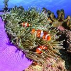 ONU inicia negociações para tratado de biodiversidade marinha