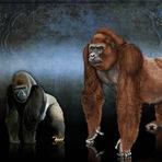 Animais - O Maior Primata que já existiu: Conheçam o Gigantopithecus
