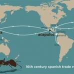 Navios espanhóis do século XVI propagaram formigas tropicais pelo mundo