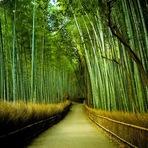 Pessoal - O bambu chinês