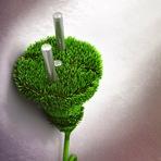 Meio ambiente - Energia limpa é gerada a partir de plantas sem prejudicá-las